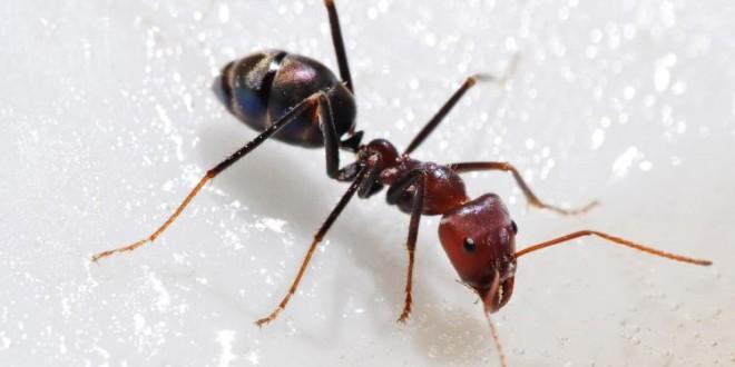 Bir garip karınca hikayesi…